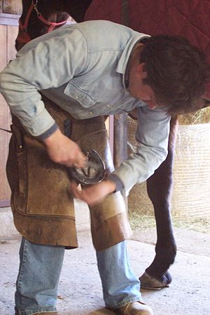 Farrier - Nailing on shoes