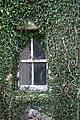 Ivy-framed window - geograph.org.uk - 735265.jpg