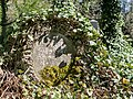 Ivy covered tombstone (24779258862).jpg
