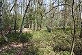 Jüdischer Friedhof Hoyerhagen 20090413 025.JPG