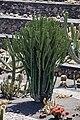 Jardín de Cactus - Lanzarote - J01.jpg