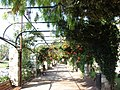 Jardin Albert 1er, Nice, Provence-Alpes-Côte d'Azur, France - panoramio - M.Strīķis (1).jpg