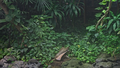 Jungle (38741268965).png