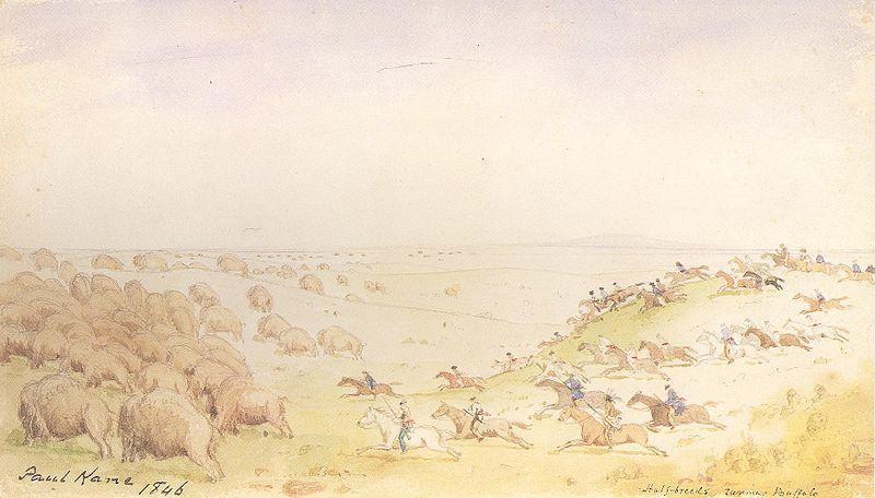 File:Kane Métis Buffalo Hunt.jpg