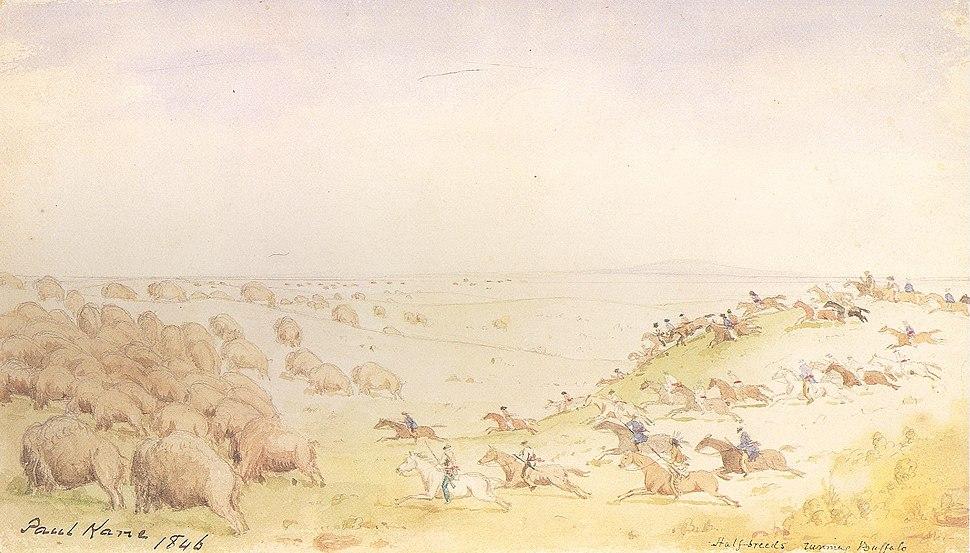 Kane Métis Buffalo Hunt
