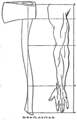 Kapp's axe in proportion to the human arm (Labour and Childhood).png