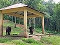 Kappukadu elephants.jpg