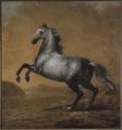 Karl XIs livhäst Den Lille Engländaren (David Klöcker Ehrenstrahl) - Nationalmuseum - 14794.tif