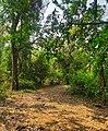 Karnala forest.jpg