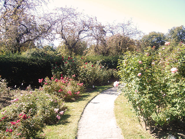 Rose Garden Back Bay Fens