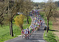 Kirschblütenrennen 2011 Hauptfeld Elite.jpg