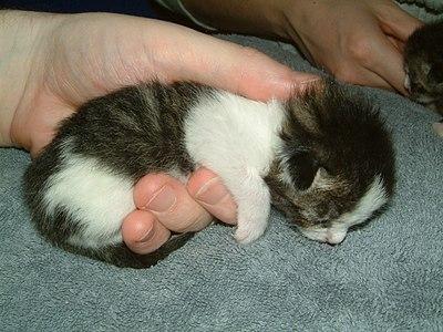 Kitten-kasimir-in-hand.jpg