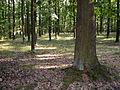 Klanovicky les2.jpg