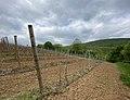 Kosmaj vineyard 1.jpg