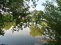 Krushynka17-05-2013RyabenkoveDSCN1338.JPG