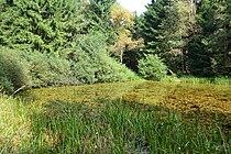Lügde - 2014-09-08 - Schwalenberger Wald, Himmelsteich (3).jpg