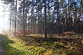 LSG Forst Rundshorn IMG 2299.jpg