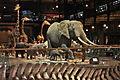 La galerie de lEvolution (Museum National dHistoire Naturelle) (2593147609).jpg
