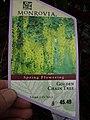 Laburnum × watereri (Goldenchain tree)- invasive plant sold in stores label.jpg