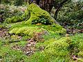 Land of moss (10493592784).jpg