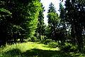 Landschaftsschutzgebiet Turmberggebiet bei Wesseln - Waldweg 1.jpg