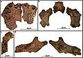 Lapa do Santo - Sepultamento 09 - Ossos do cranio e mandibula.jpg