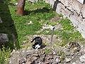 Largo di Torre Argentina cat 12.jpg