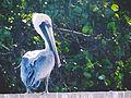 Las aves de las Costas de Sucre, Venezuela.jpg