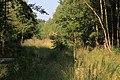 Lasy Łączańskie - panoramio (31).jpg