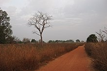 This shows a laterite road near Kounkane, Upper Casamance, Senegal. It resembles a red gravelled road.