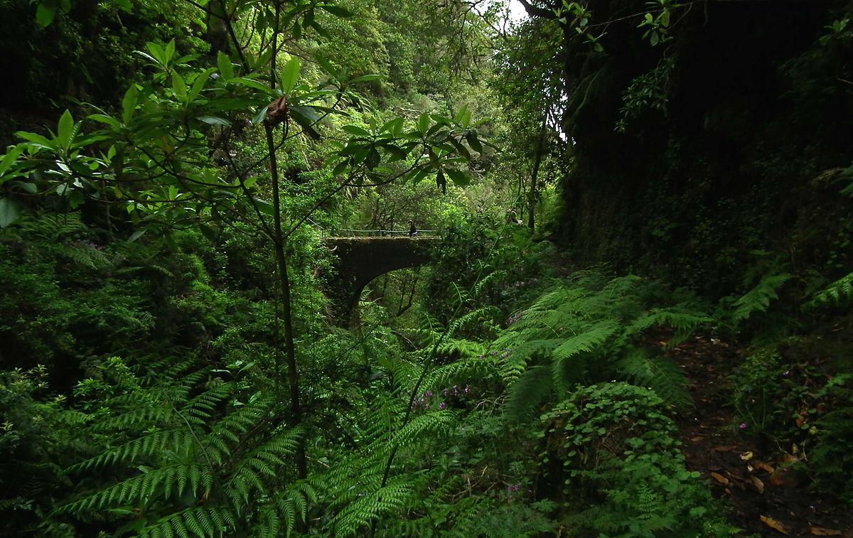 Laurisilva wikipedia for Cabine della foresta lacustre