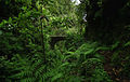 Laurissilva da Madeira 07.jpg
