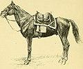 Les races chevalines - avec une étude spéciale sur les chevaux russes (1894) (14753447536).jpg