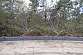 Liberty Island a few days after the Hurricane Sandy - Uprooted trees.jpg