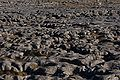 Limestone pavement.JPG