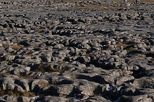 Limestone pavement - Detail of the large limestone pavement in the Yorkshire Dales between Ingleborough and Pen-y-ghent.