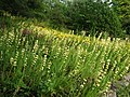 Linda Vista Flower Beds - geograph.org.uk - 1767814.jpg