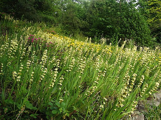Linda Vista Flower Beds - geograph.org.uk - 1767814