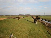 Liniewal Geindijk-Nigtevecht 2.JPG