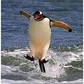 Linux-Penguin-Image-163-163.jpg