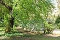Liquidambar orientalis and French Greenhouse, c. 1883-1884 - Orto botanico - Rome, Italy - DSC09843.jpg