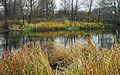 Lob Река Корень Осень.jpg