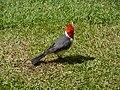 Local birds (3727139266).jpg