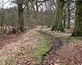 Lodge Plantation - geograph.org.uk - 1728193.jpg