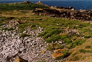 Looking NNE across the narrowest part of Annet, Isles of Scilly - geograph.org.uk - 84242.jpg