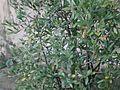 Lorto-botanico-di-padova-2016 27757185784 o 03.jpg