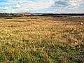 Low Bradup, Morton Moor - geograph.org.uk - 48247.jpg