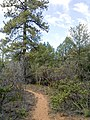Loy Canyon Trail, Sedona, Arizona - panoramio (16).jpg