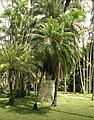 Lucio Salvatore, Jardim Botanico (2008) 1.jpg