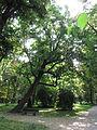 München Alter Nordfriedhof Maxvorstadt 20.JPG